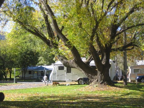 Tumbarumba Creek Caravan Park - Accommodation Airlie Beach