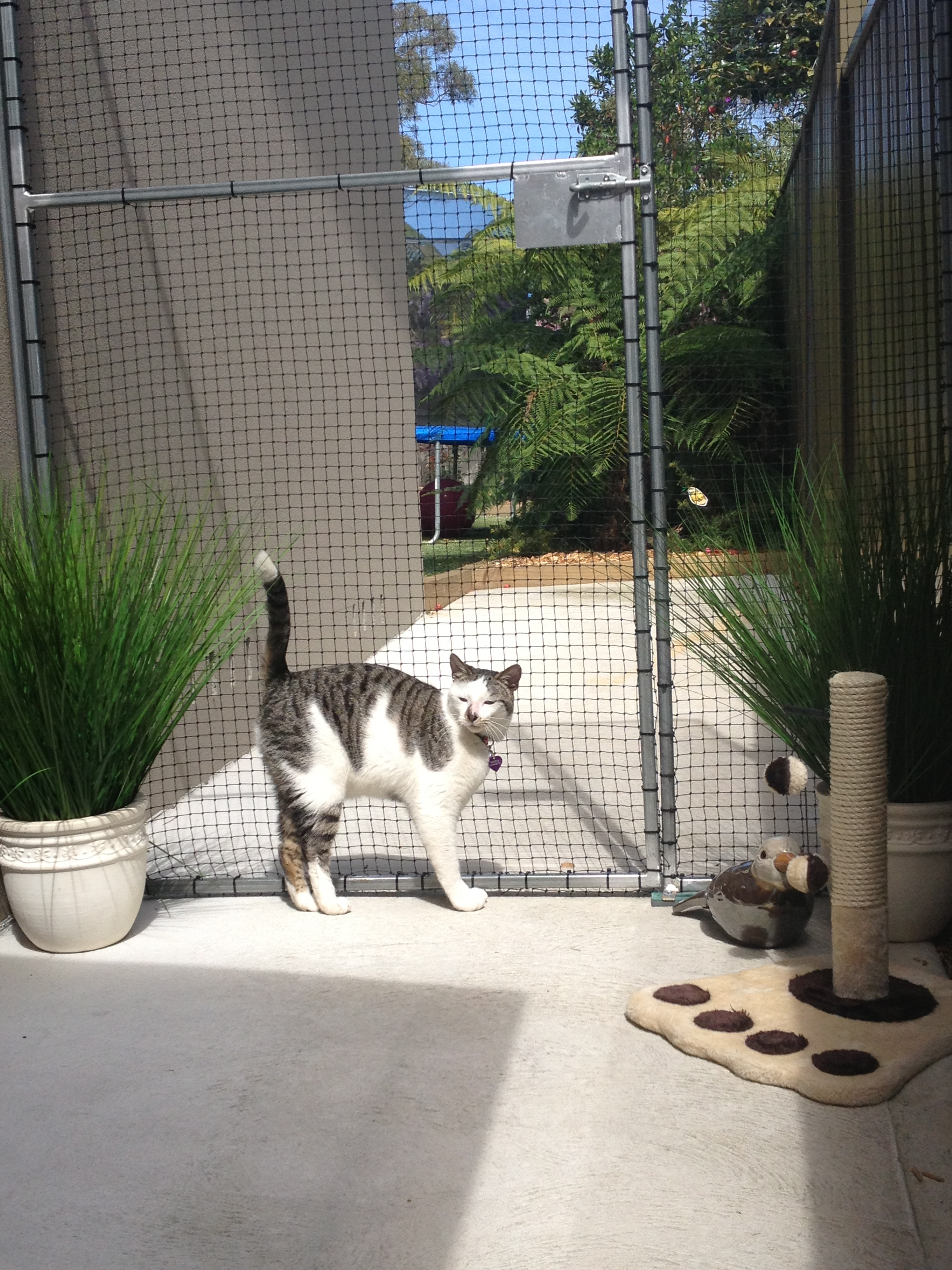 Caringbah Cat Hotel - Accommodation Airlie Beach