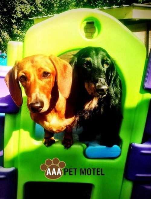 AAA Pet Motel - Accommodation Airlie Beach
