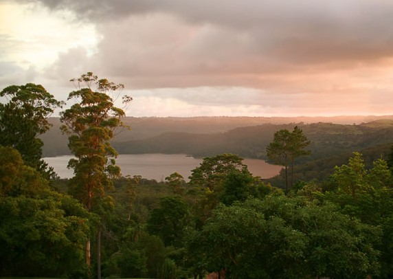 Montville Misty View Cabins - Accommodation Airlie Beach