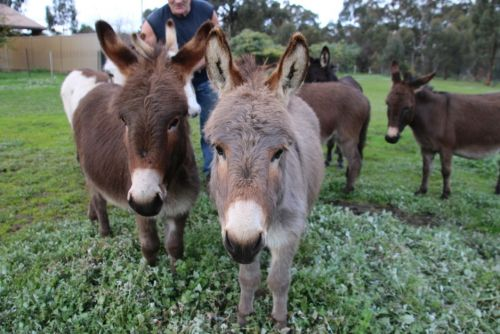 Donkey Tales Farm Cottages - Accommodation Airlie Beach