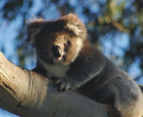 Bimbi Park Camping Under Koalas - Accommodation Airlie Beach
