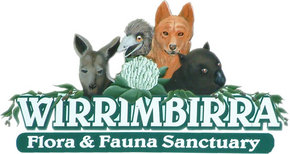 Wirrimbirra Sanctuary - Accommodation Airlie Beach