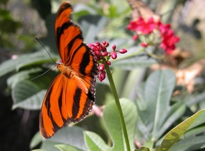 Butterfly Farm - Accommodation Airlie Beach