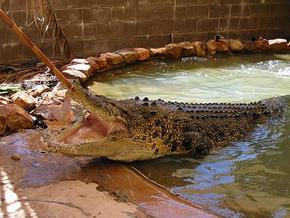 Wyndham Zoological Gardens and Crocodile Park - Accommodation Airlie Beach