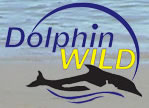 Dolphin Wild - Accommodation Airlie Beach