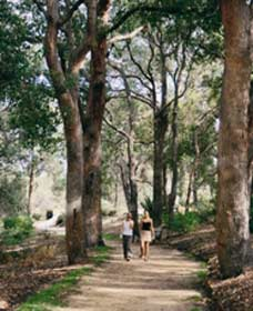 Law Trail and Lotterywest Federation Walkway Kings Park - Accommodation Airlie Beach