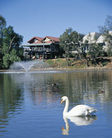 White Swans - Accommodation Airlie Beach