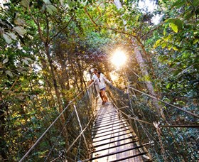 Tree Top Walkway - Accommodation Airlie Beach