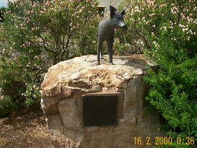 Dingo Statue - Accommodation Airlie Beach