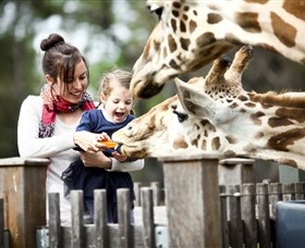 Taronga Western Plains Zoo Dubbo - Accommodation Airlie Beach
