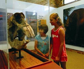 Australian Museum Diprotodon Exhibition - Accommodation Airlie Beach