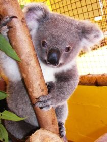 Cooberrie Park Wildlife Sanctuary - Accommodation Airlie Beach