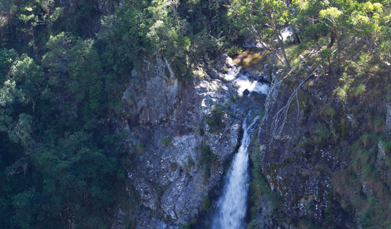 Lyrebird Falls walking track - Accommodation Airlie Beach