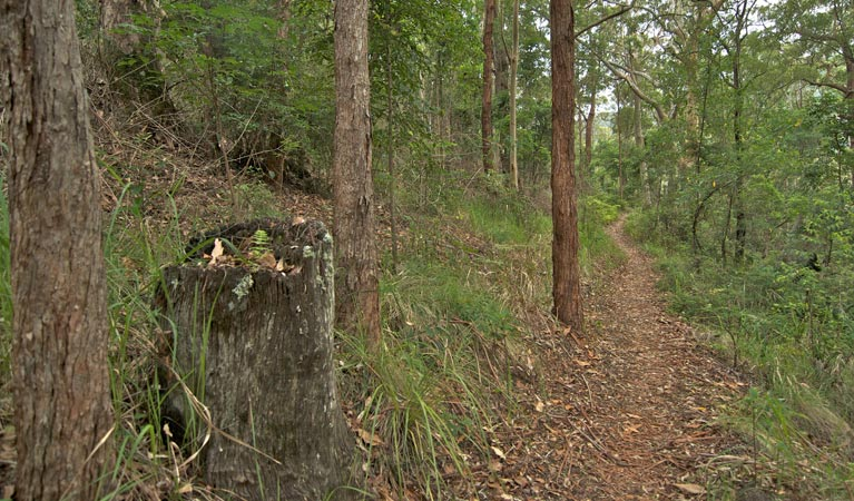 Border loop walk - Accommodation Airlie Beach
