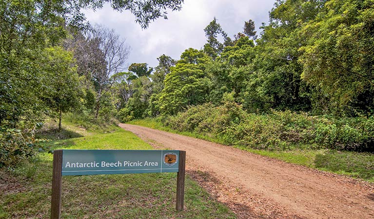 Antarctic Beech picnic area - Accommodation Airlie Beach