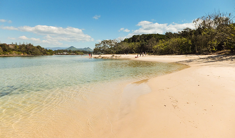 Brunswick Heads Nature Reserve - Accommodation Airlie Beach