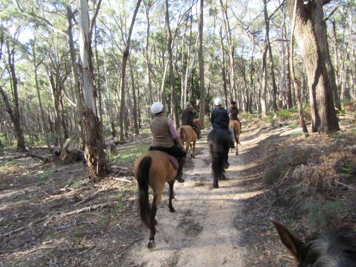 Silver Brumby Trails - Accommodation Airlie Beach