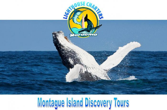 Lighthouse Charters Narooma - Accommodation Airlie Beach
