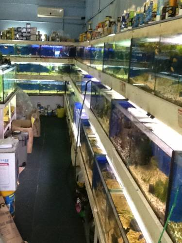 Clearwater Aquariums - Accommodation Airlie Beach