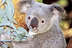 Perth Zoo General Entry Ticket and Sightseeing Cruise - Accommodation Airlie Beach