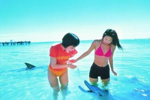 Monkey Mia Dolphins  Shark Bay Air Tour From Perth - Accommodation Airlie Beach