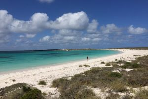 Abrolhos Island Half Day Fly and Flipper - Accommodation Airlie Beach