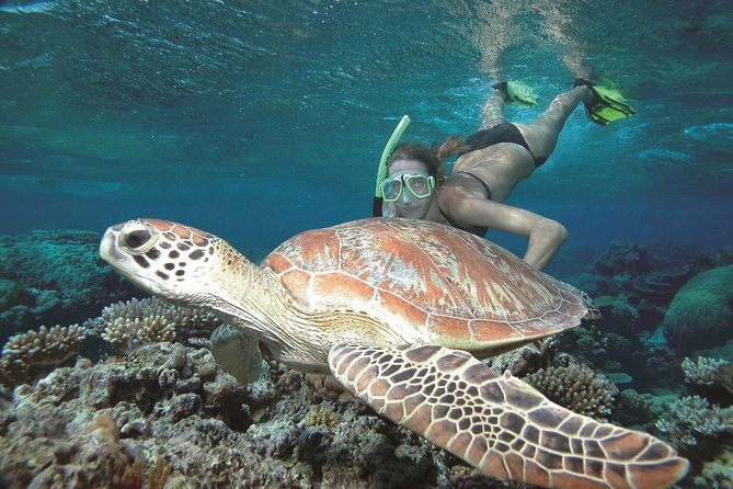 Great Barrier Reef Sailing and Snorkeling Cruise from Port Douglas - Accommodation Airlie Beach