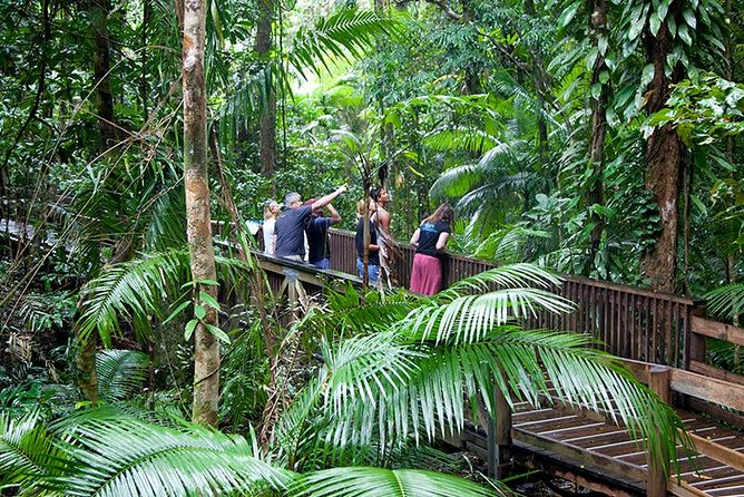 Full Day Daintree Rainforest and Mossman Gorge Tour - Accommodation Airlie Beach