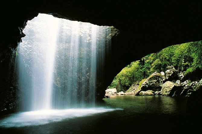 World Heritage Springbrook National Park Tour Including Natural Bridge - Accommodation Airlie Beach