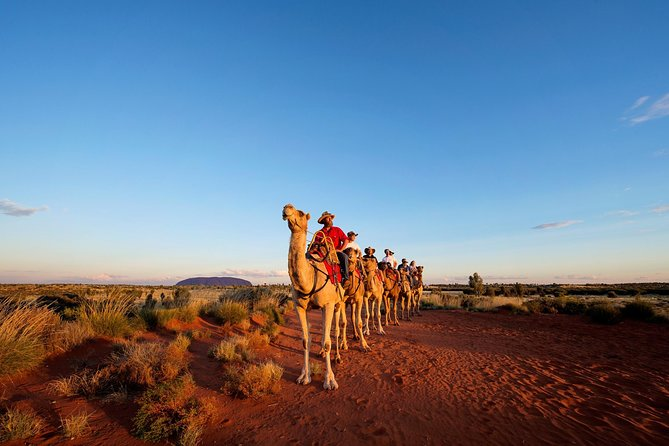 Uluru Camel Express Sunrise or Sunset Tours - Accommodation Airlie Beach