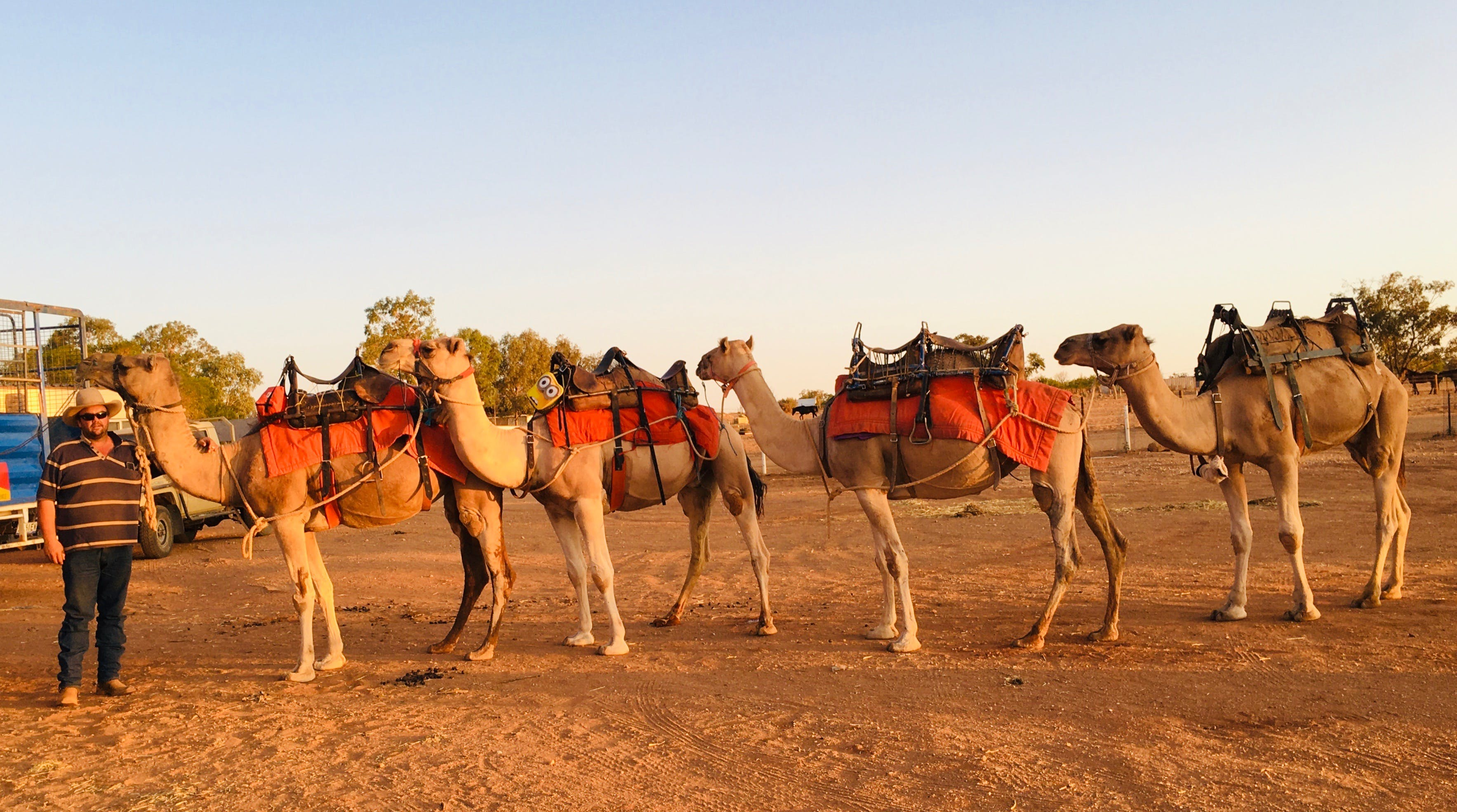 Broken Hill Camels - Accommodation Airlie Beach