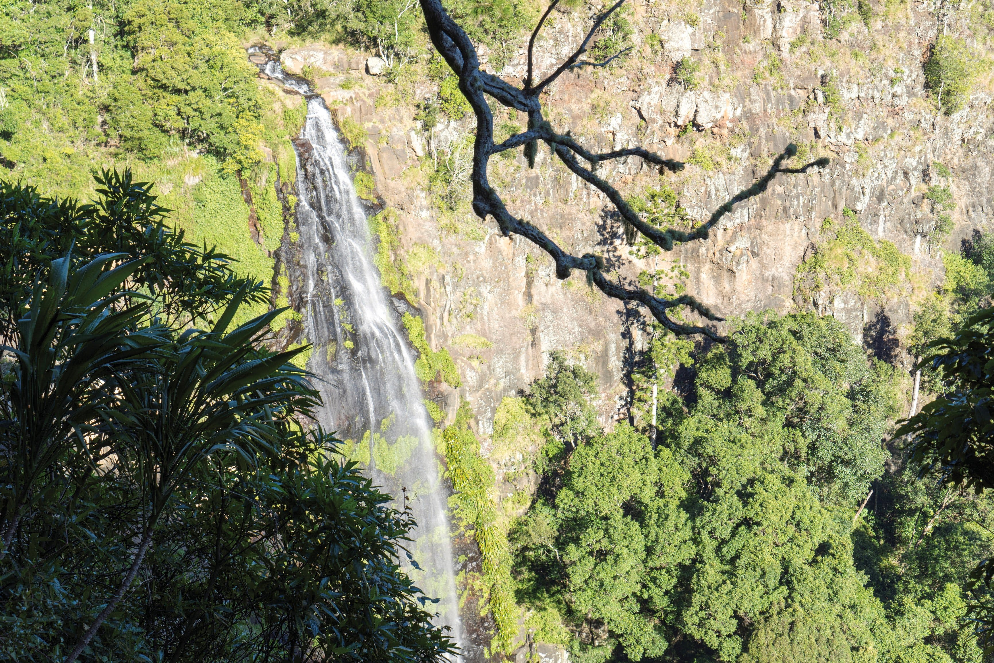 Morans Falls track Lamington National Park - Accommodation Airlie Beach