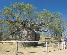 Boab Prison Tree - Accommodation Airlie Beach