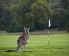 Anglesea Golf Club - Accommodation Airlie Beach