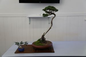 Wauchope Bonsai Workshop Group - Accommodation Airlie Beach