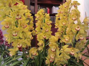 Sapphire Coast Orchid Club Winter Orchid Show - Accommodation Airlie Beach