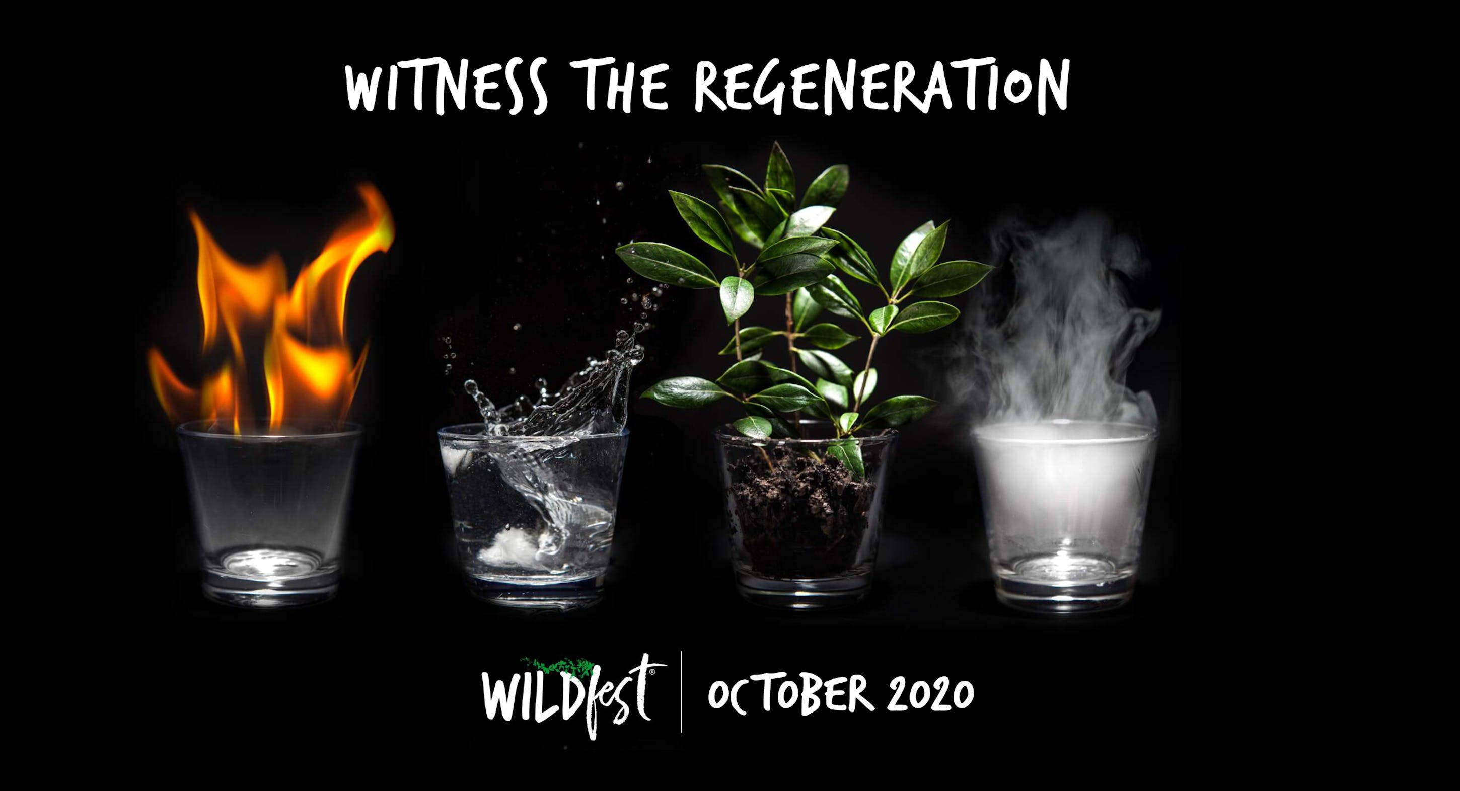 Wildfest - Annual Festival - Accommodation Airlie Beach