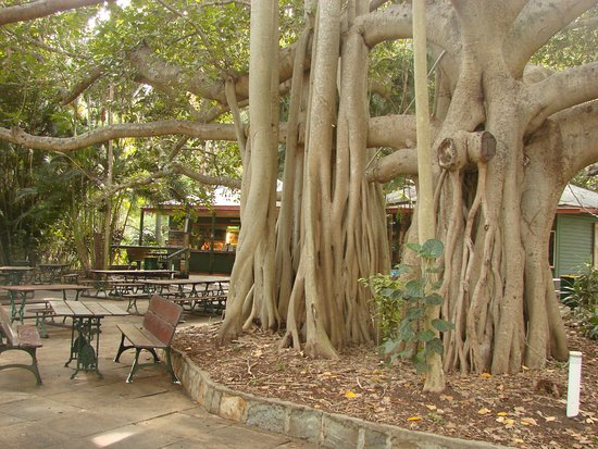 Gardens Tearooms - Accommodation Airlie Beach